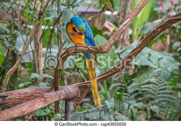 blå, macaw, træ, papegøjer, branch, fugl - csp43855656