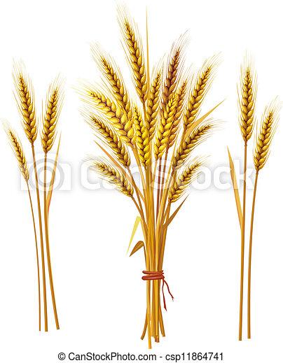 blé, pointe - csp11864741