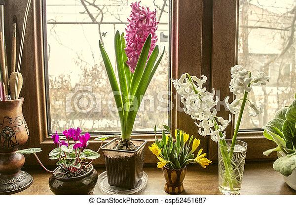 Blute Hyazinthen Blumen Fensterbank Cyclamen Hyazinthen