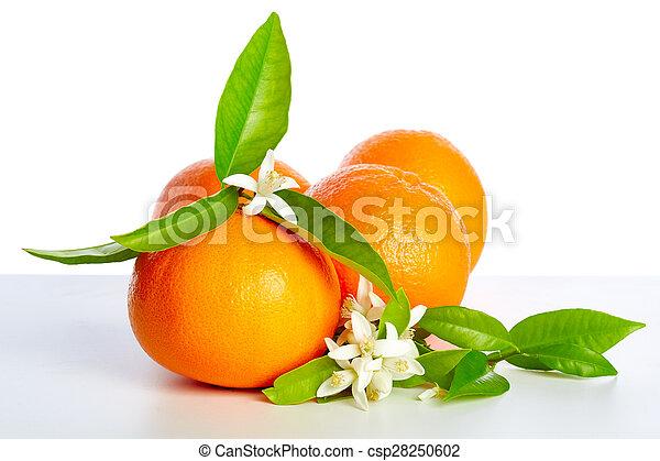 Blüte, orange, weisse blumen, orangen. Blüte, fruehjahr, orangen ...