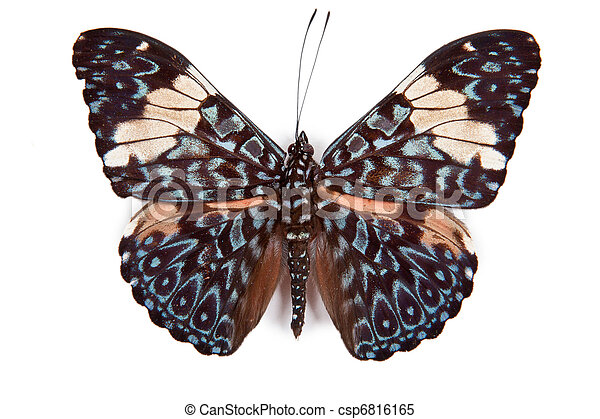 Black and blue butterfly Hamadryas amphinome isolated on white background - csp6816165