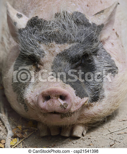 Black And Pink Pig - csp21541398