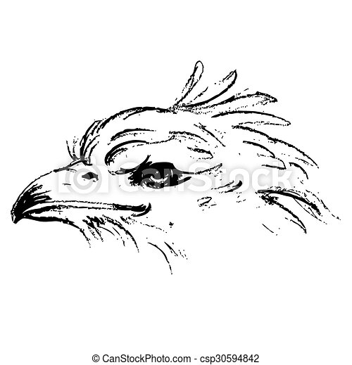 Black and white angry eagle head  - csp30594842