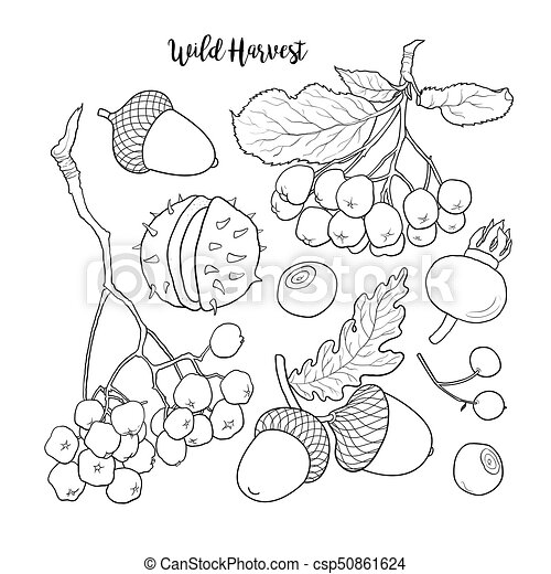 black and white autumn fall fruits and berries set of hand drawn