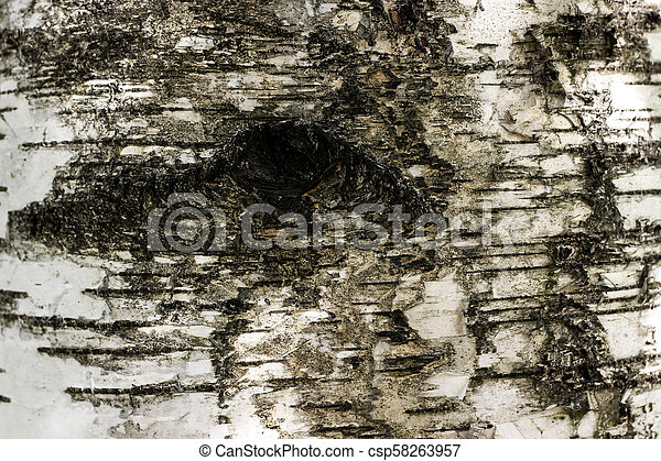 Black and white birch bark texture with eye hole - csp58263957