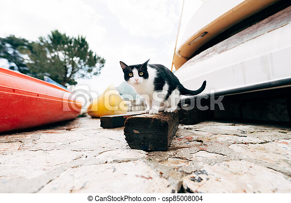 Black and white cat on a wooden board against the background of the boat station. - csp85008004