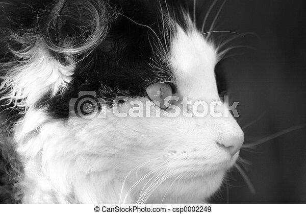 Black and White Cat - csp0002249