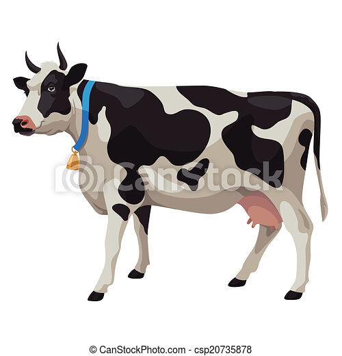 Black and white cow, side view, isolated - csp20735878