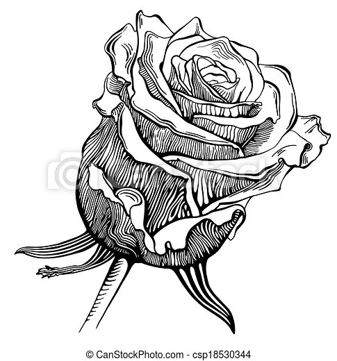 Black And White Digital Drawing Sketch Rose