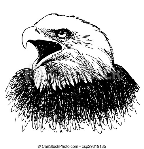 Black and white eagle hand drawn  - csp29819135