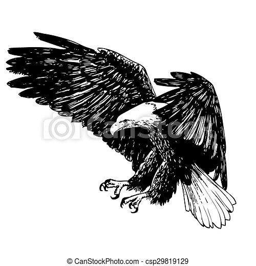 Black and white eagle hand drawn  - csp29819129