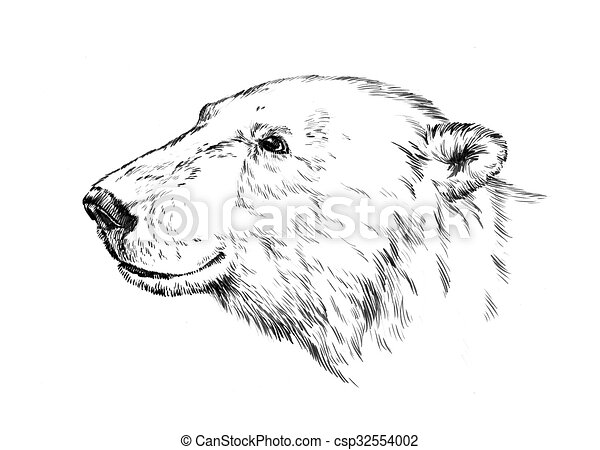 black and white engrave isolated bear - csp32554002