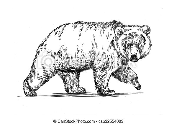 black and white engrave isolated bear - csp32554003