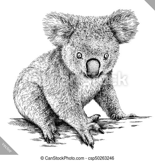 Black and white engrave isolated koala vector illustration