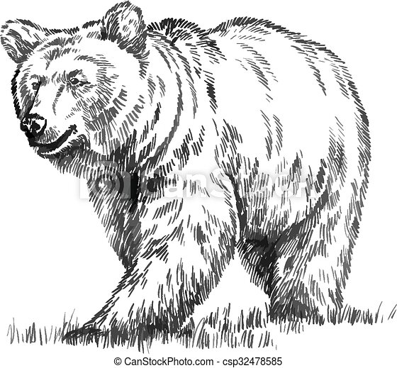 black and white engrave isolated vector bear - csp32478585