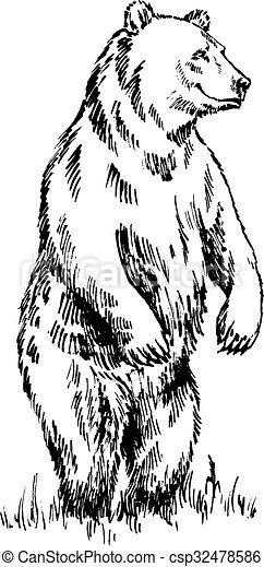 black and white engrave isolated vector bear - csp32478586