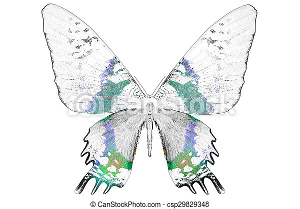 Black and white image of beautiful butterfly with colorful wings - csp29829348