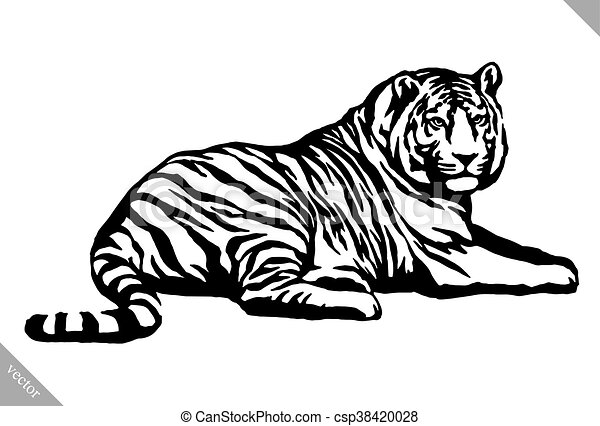 black and white ink draw tiger vector illustration black and white