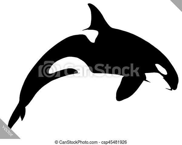 black and white linear paint draw killer whale illustration - csp45481926