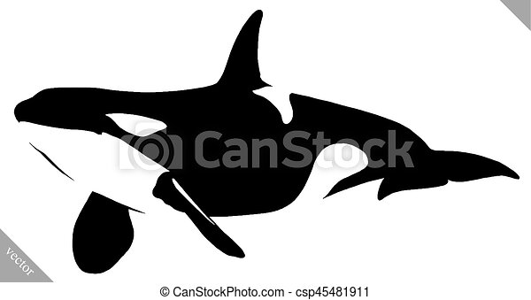 black and white linear paint draw killer whale illustration - csp45481911