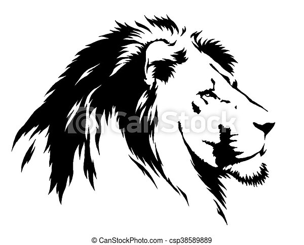 Line Drawing Lion Head : Black and white linear paint draw lion illustration
