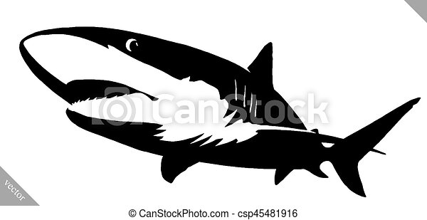 shark draw
