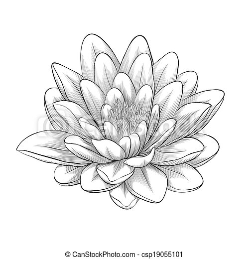 black and white lotus flower painted in graphic style isolated - csp19055101