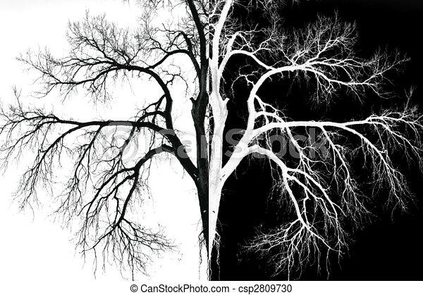 black and white mirror image. Black Bedroom Furniture Sets. Home Design Ideas
