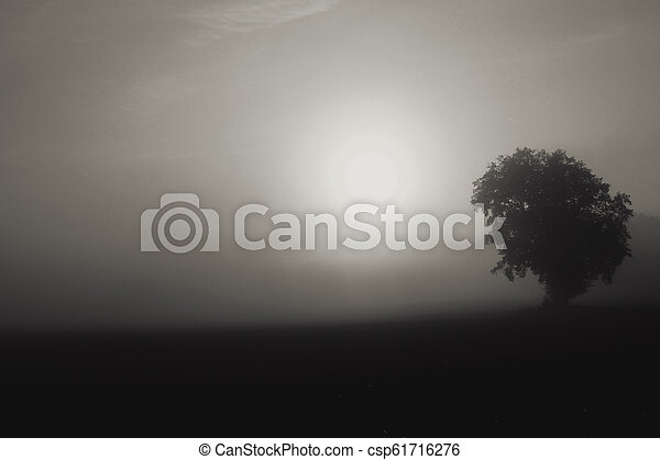 black and white morning light - csp61716276