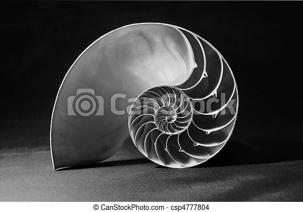 Black and white nautilus shell with geometric pattern - csp4777804