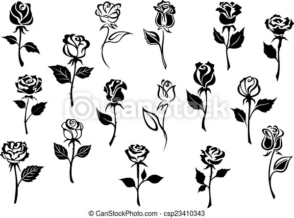 Line Drawing Flower Vector : Black and white roses flowers. elegance eps