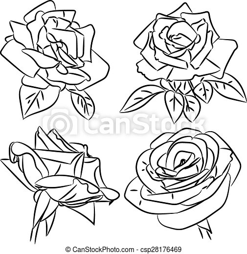 Black and white roses sketches - csp28176469