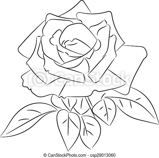 Black and white roses sketches - csp29013060