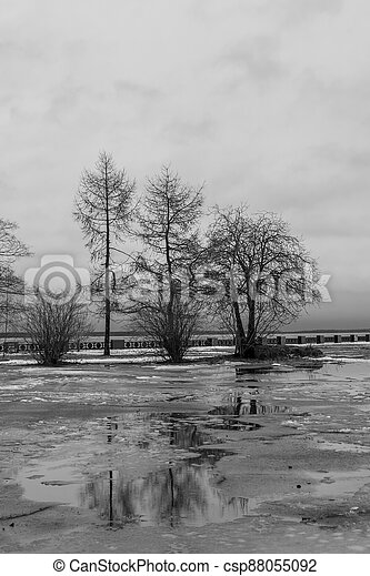 Black and white scene of trees on spring cloudy day on lake embankment - csp88055092