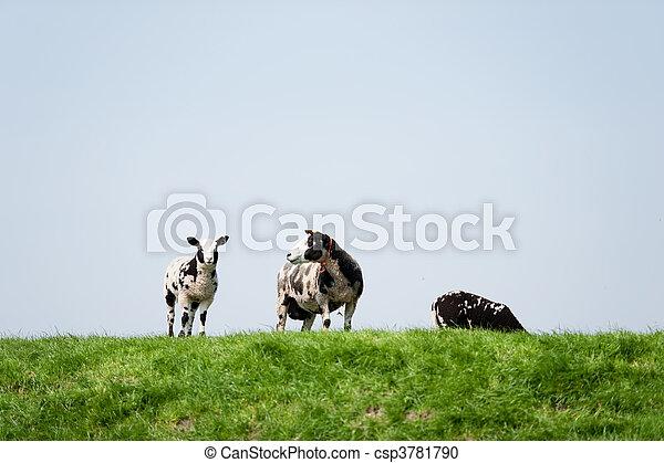Black and white sheep - csp3781790