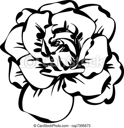 black and white sketch of rose - csp7395673