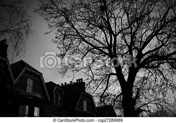 Black and white trees silhouettes - csp27289989