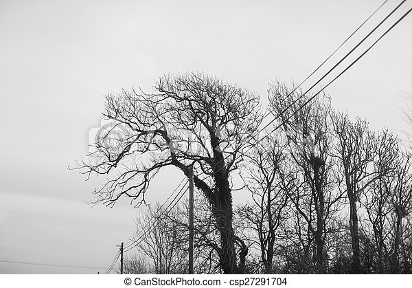 Black and white trees silhouettes - csp27291704