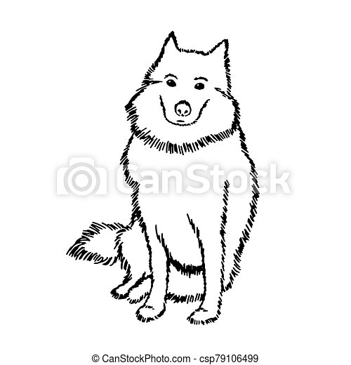 Black and white vector drawing of a Samoyed dog. A cute pet is sitting and waiting for the owner. The big shaggy dog looks at us expectantly and with reproach. Good white thoroughbred dog - csp79106499
