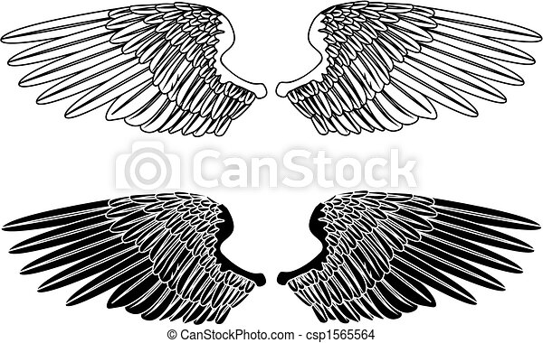 Black and White Wings - csp1565564