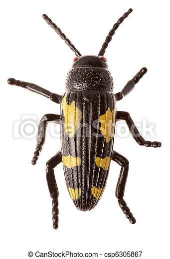 Black beetle - csp6305867