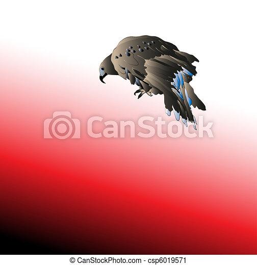 Black bird predator aggressive hawk - csp6019571