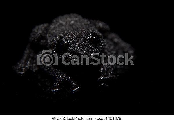 Black bug-eyed frog on black - csp51481379
