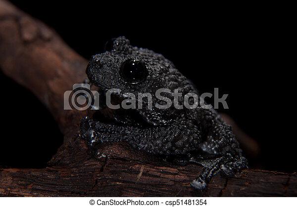 Black bug-eyed frog on black - csp51481354