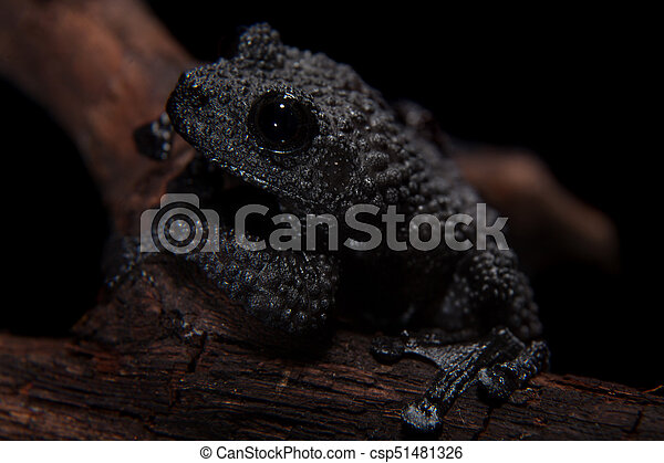 Black bug-eyed frog on black - csp51481326
