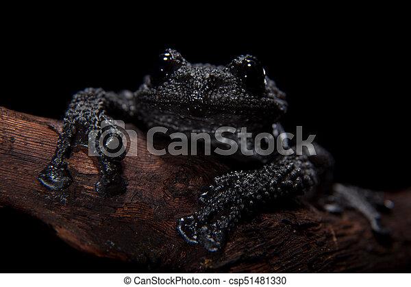 Black bug-eyed frog on black - csp51481330