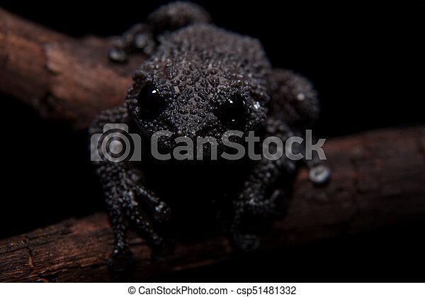 Black bug-eyed frog on black - csp51481332