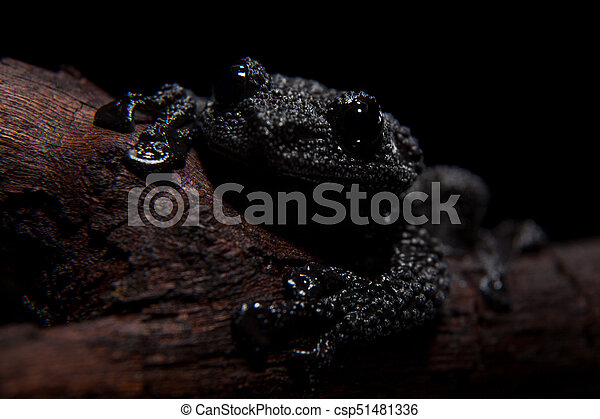 Black bug-eyed frog on black - csp51481336