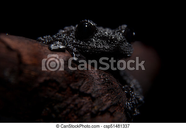 Black bug-eyed frog on black - csp51481337
