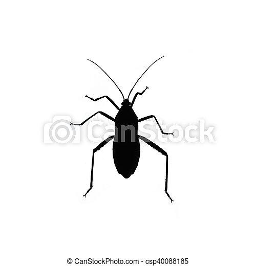 Black bug isolated on white background - csp40088185